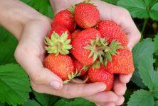 Sezóna jahod a třešní je tady!